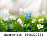 Beautiful Spring  Background...