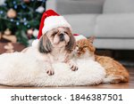 Cute Cat And Dog In Santa Hats...