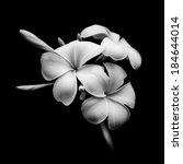 beautiful white flowers... | Shutterstock . vector #184644014
