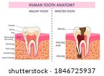 vector detailed scientific...   Shutterstock .eps vector #1846725937