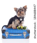 Yorkshire Terrier Dog On A...