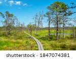 Natural Landscape Of Viru Bog ...
