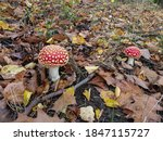 Two Bright Red Toadstools Grown ...