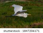 Amazing Beautiful White Bird...