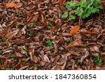 Colorful Autumn Fallen Leaves...
