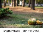 There Are Two Pumpkins On The...
