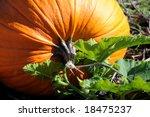 Perfect Orange Pumpkin