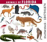 Vector Set   Animals Of Florida ...