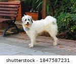 best friend  best travel... | Shutterstock . vector #1847587231