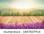 Beautiful Verbina Flowers Front ...