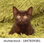 Little Cute Black Kitten On A...