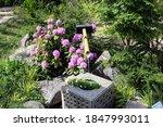 Japanese Style Garden In...