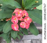 photo of a red flower plant in...   Shutterstock . vector #1848140767