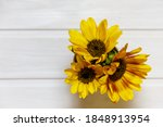 Beautiful Sunflowers On A White ...