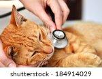 Veterinarian Examining A Kitte...