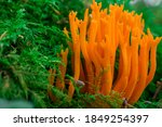Mushroom In The Forest With...