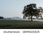 A Large Tree In A Meadow With...