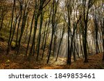 Autumn Forest With Sunbeams In ...