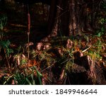 Close Up Of A Tree Trunk With...