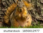 Adorable Pregnant Squirrel...