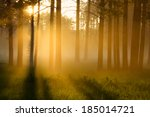 foggy morning in a forest