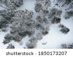 Top View Of A Forest In Winter...