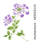 Watercolor Illustration Purple...
