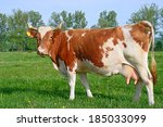 cow on a summer pasture | Shutterstock . vector #185033099