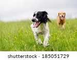 Happy Dogs Having Fun In A...