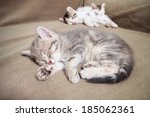Stock photo three sleeping kittens animals domestic cat relaxing cat cat resting 185062361