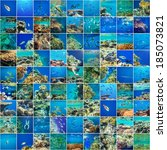 coral reef in red sea egypt | Shutterstock . vector #185073821