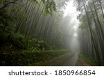 Small photo of Mist forest road. Road in misty forest. Forest road in misty. Forest mist view