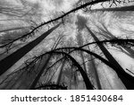dark scary forest   wide angle... | Shutterstock . vector #1851430684