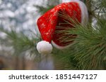Santa Claus Hat On A Pine Tree...