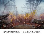 autumn fog in forest with... | Shutterstock . vector #1851456484