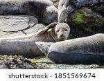 A Confused Looking Grey Seal...