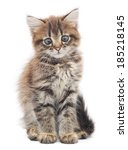 Stock photo small gray kitten on a white background 185218145