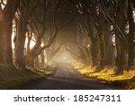 dark hedges ii | Shutterstock . vector #185247311