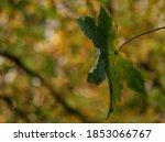 Close Up Of A Single Leaf...