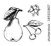 Pencil Sketch Of Fruit Vector....