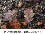 Fallen Autumn Leaves With...