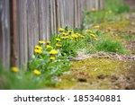 Dandelion Weeds Growing Along...