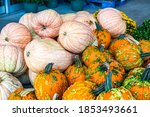 Pink And Pale Pumpkins With...