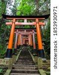 Orange Torii Gates Leading Up...