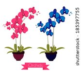 colorful pink and blue orchids... | Shutterstock .eps vector #185397755