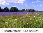 Beautiful Summer Landscape Of...