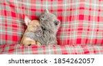 Kitten Hugs Toy Terrier Puppy...