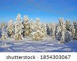 Siberian Taiga On A Sunny...