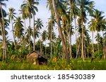 Farm. Coconut Trees. Tropics....