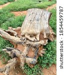 Uprooted Tree Stump On The...